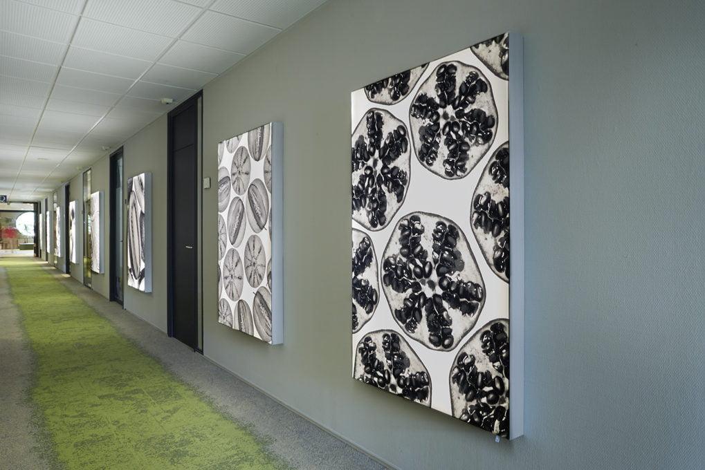 Interieurfoto kantoor KCB Zoetermeer - Gang met ledlichtpanelen aan de wand voorzien van afbeeldingen van zaden en vruchten. Op de vloer groene (gras) tapijttegels  met aan weerzijden uitlopend in grijs (kiezels)
